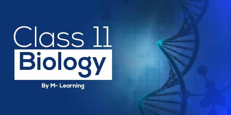 Class 11th - Biology
